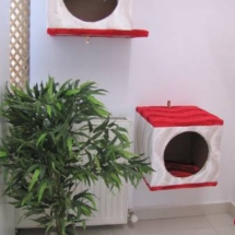 kedi-pansiyonu-ucretleri