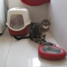 kedi-pansiyonu-umraniye